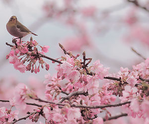 bird, pink flowers, and flower blossom image