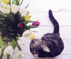 cat, tulips, and yellow image