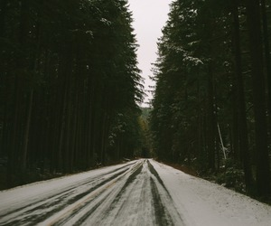 beautiful, forest, and indie image
