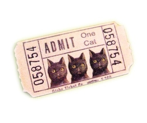 cat, ticket, and cute image