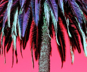 tree, palm, and pink image