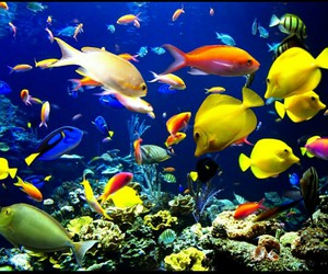 amazing, sea life, and colours image
