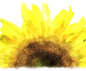 sunflower and watercolor image