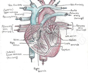 anatomy, art, and text image