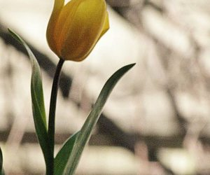 bokeh, calm, and flowers image