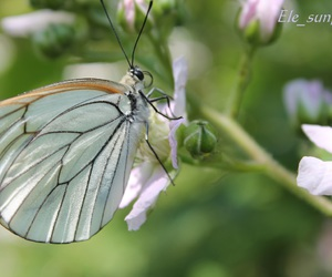 canon and butterfly image