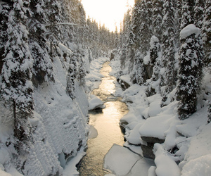 snow, winter, and forest image