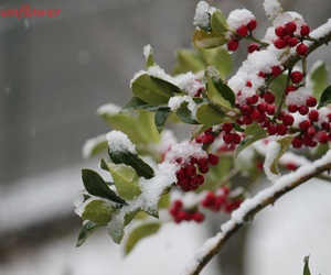 canon, winter, and snow image