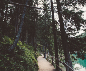 trees, forest, and green image