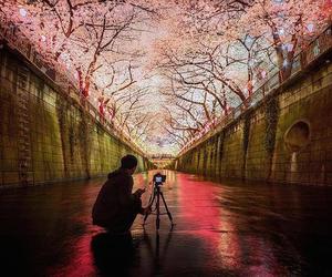 flowers, sakura, and japan image