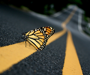 butterfly, road, and photography image