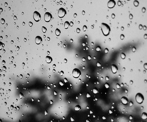 autumn, bw, and drops image