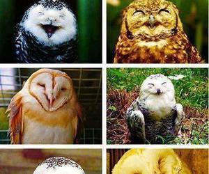 owl, smile, and animal image