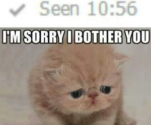 friendship, cat, and sorry image