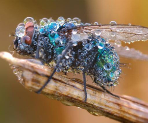 fly, nature, and insect image