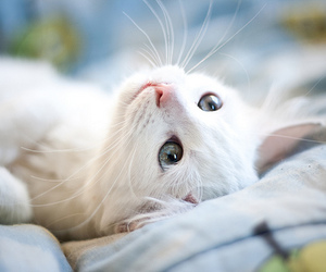 animal, blue eyes, and so cute image