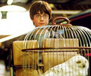 harry potter, owl, and daniel radcliffe image