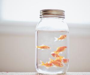 fish, water, and animal image