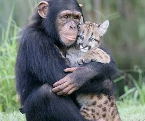 animal and love image