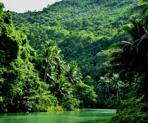 nature, green, and paradise image