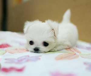366 images about cute fluffy things on we heart it see more about