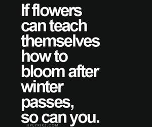bloom, flowers, and Loge image