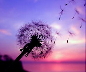 dandelion, emotions, and flowers image