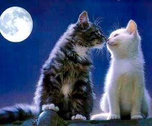 cat, moon, and kiss image