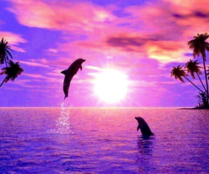 dolphins, feelings, and shadow image