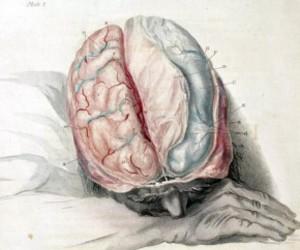 脑 image