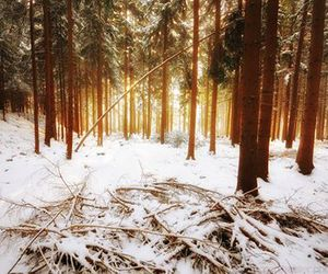 inspiration, snow, and trees image