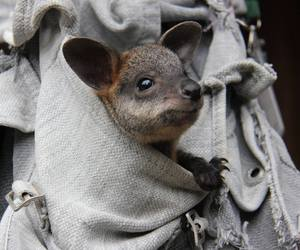 australia, baby animals, and cute animals image