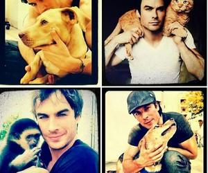cat, monkey, and dog image