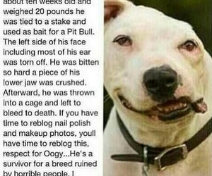 dog, sad, and animals image