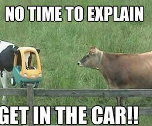 black, car, and cow image