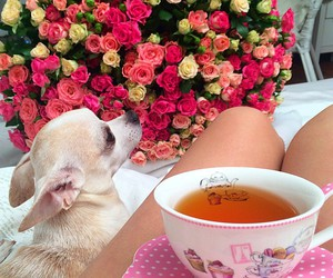 rose, tea, and love image