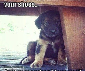 dog, funny, and puppy image