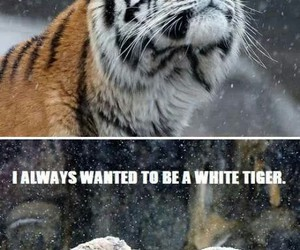 tiger, snow, and white image