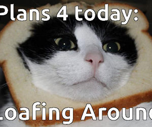 around, cat, and funny image