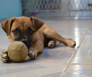 ball, dog, and puppy image