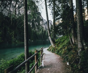 forest, nature, and lake image