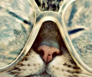 cat, hipster, and glasses image