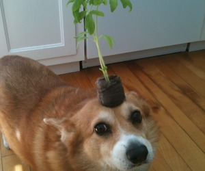 dog, cute, and plants image