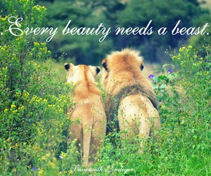 beast, beauty, and couples image