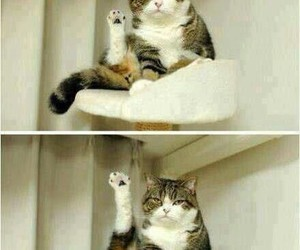 cat, funny, and leg image