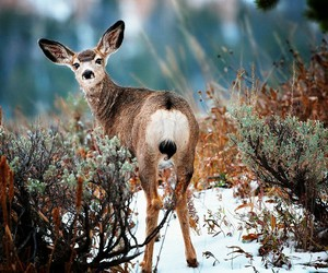 deer, animals, and nature image