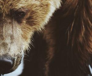 bear, animal, and nature image