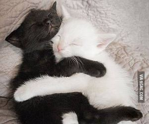 adorable, awwwwwwwww, and blank and white image