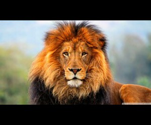 africa, animals, and king image