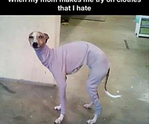 dog, funny, and clothes image